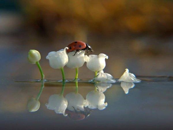 Pour mes amies et mes amis, les poétes, les artistes, les jardiniers, les photographes braconniers.....