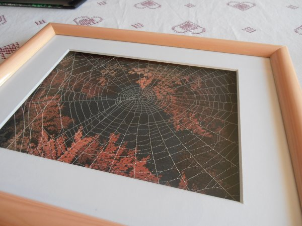 Véritable Toile d'araignée d'Épeire diadème