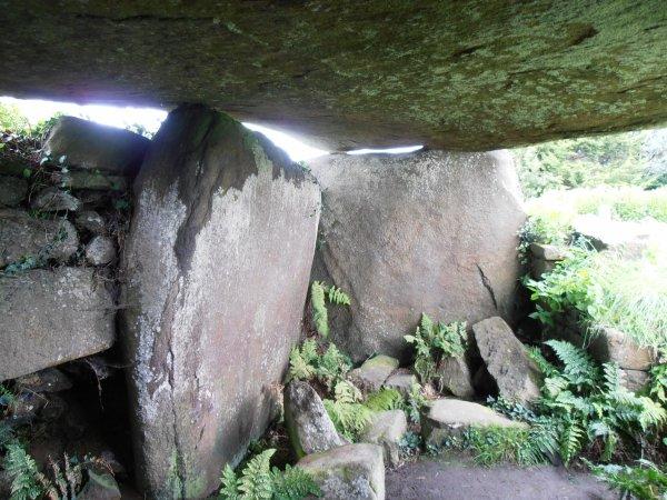 Cistes  à : Dolmen et Allée Couverte - Kerguntuil - Trégastel