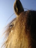 Photo de Alice35360-Chevaux