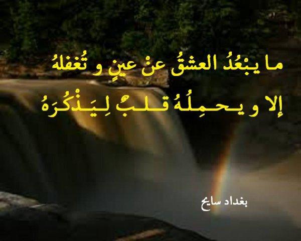 """بيت من يومياتي الشعرية """"مذكرة النورس المغناوي"""" بقلم شاعركم بغداد سايح"""