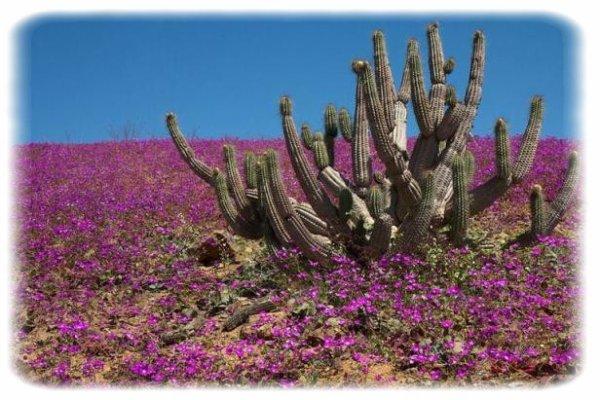 Un phénomène exceptionnel dans un des endroits les plus arides du monde !