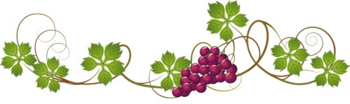 Un peu d 39 tymologie au sujet du raisin midiaou - Feuille de vigne dessin ...