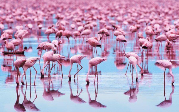 Les Flamants Roses Midiaou