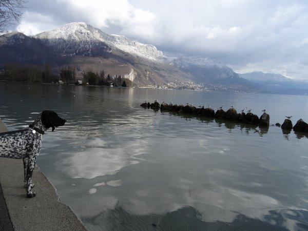 Flânerie au bord du lac en début d'après-midi. (4 articles)