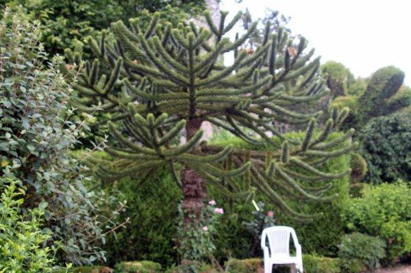 Un arbre assez insolite ...