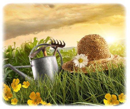 Trois de mes thèmes en un : arrosoir, chapeaux, marguerites ...