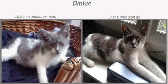 Mes Animaux ♥