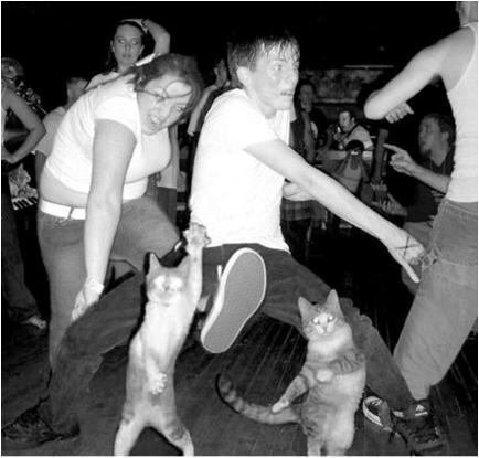 The dancing cats!