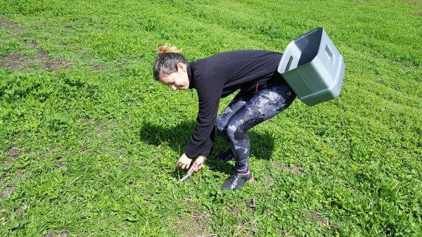 # Helpx 2 : Coupe des asperges