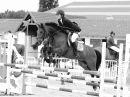 Photo de pony-gaining