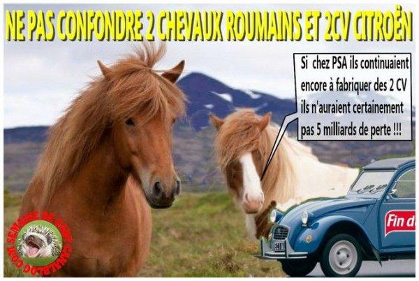 Il y a deux chevaux et 2CV !