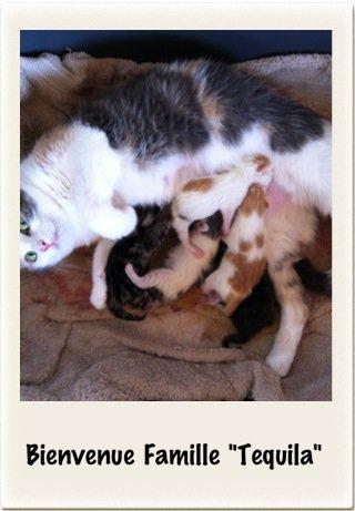 Famille MinOu (10 mai 2012)