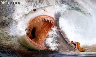Le Plus Gros Requin Du Monde Yo Tt Le Monde