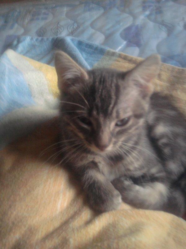 donne petite chat il 3 moi