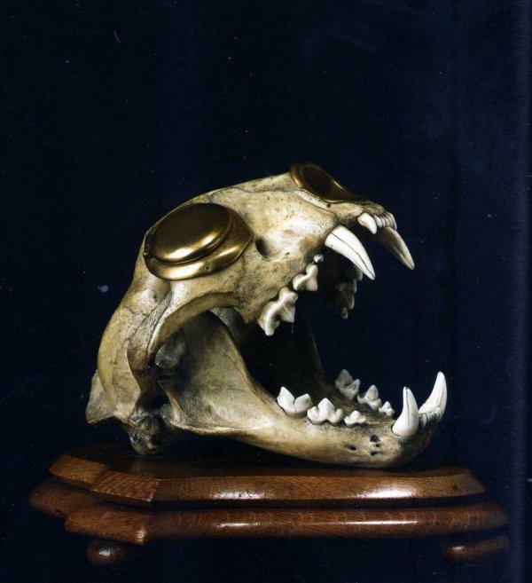 """Dans Le Cabinet Des Curiosités de Lenore:""""Le Crâne de Léopard-Encrier"""""""