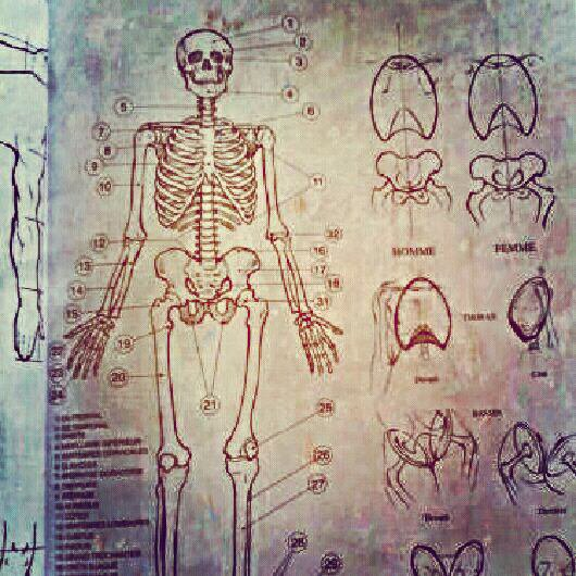 Mon nouveau livre de dessin est trop swaggy. Détails de l'anatomie humaine dans ta face.