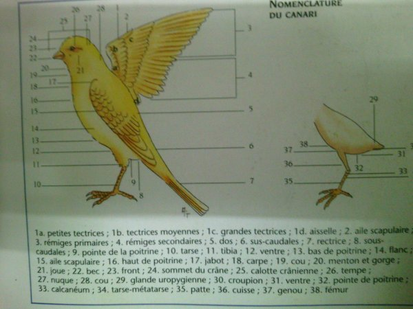 morphologie et anatomie