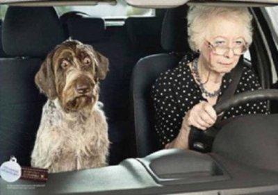 Jusqu'à quel age peut-on conduire ?