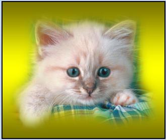 Un nouveau site d'annonces chiens et chats