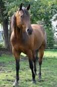 Mes chevaux et Mon Zorse
