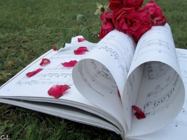 Ma Vie, la Photographie # Photo N°34: La musique des roses  © Aout 2010