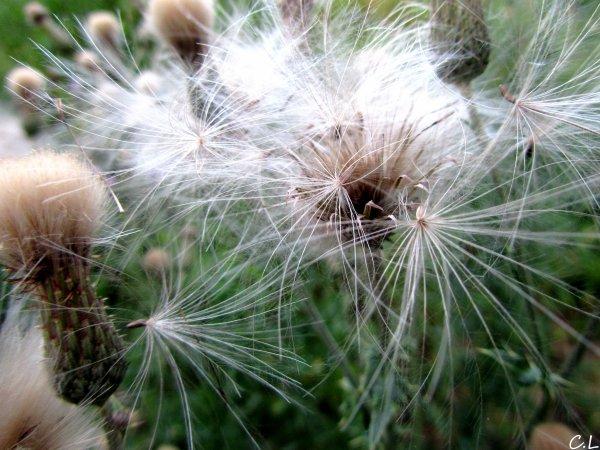 Ma Vie, la Photographie # Photo N°37 : Pollen, © Septembre 2010