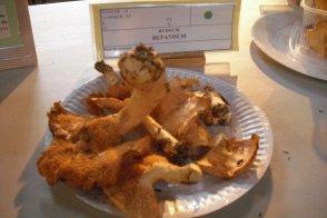 66  Champignons comestibles