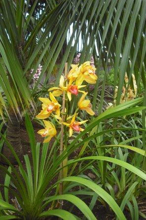 147     Jardin à Funchal