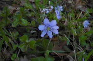 187     Fleurs de printemps