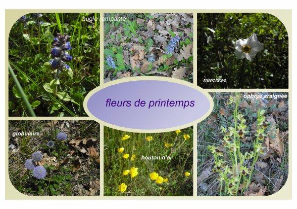 191   Fleurs sauvages de la Drôme