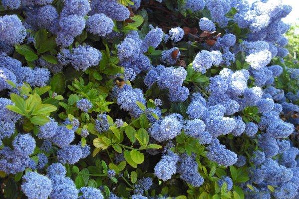 209 fleurs de jardin blog de alpeflor for Vasques pour fleurs jardin
