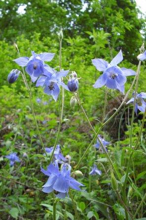 218      Fleurs des Pyrénées