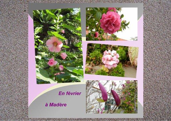 370  Fleurs roses....