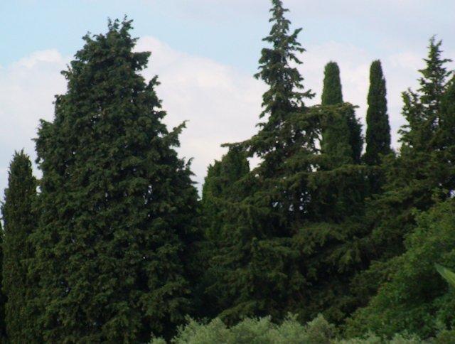 398    et vous quel est votre arbre ?