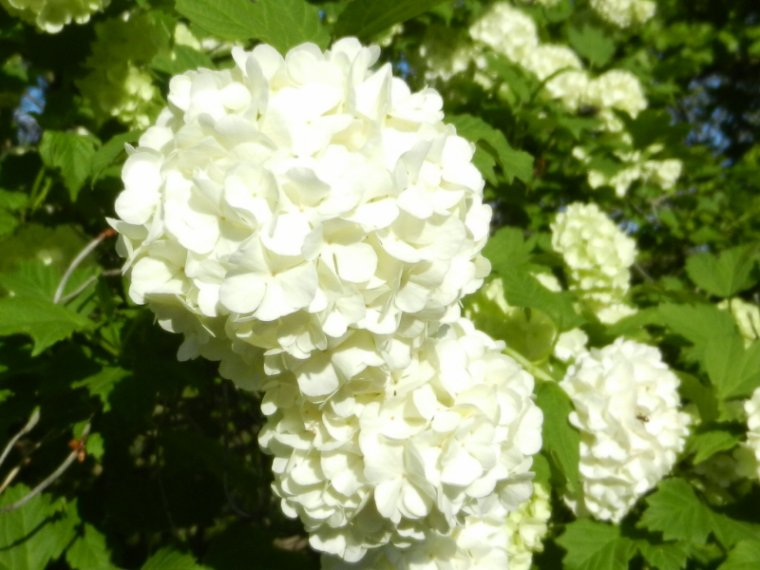 411         Fleurs printanières...