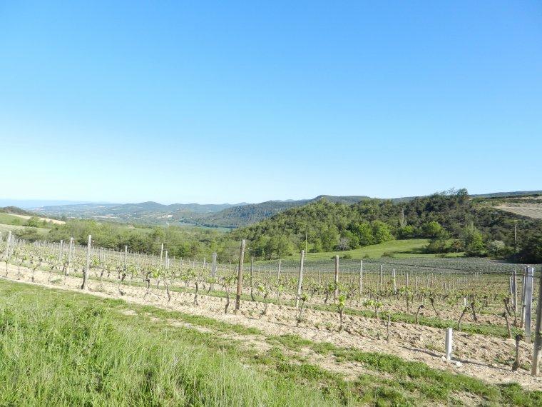 412     Promenade dans les vignes....