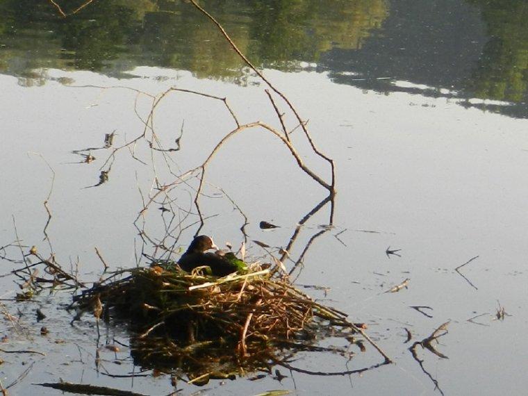 463  Les habitants du lac