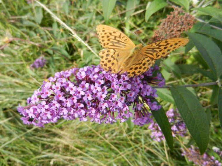 490  Papillons