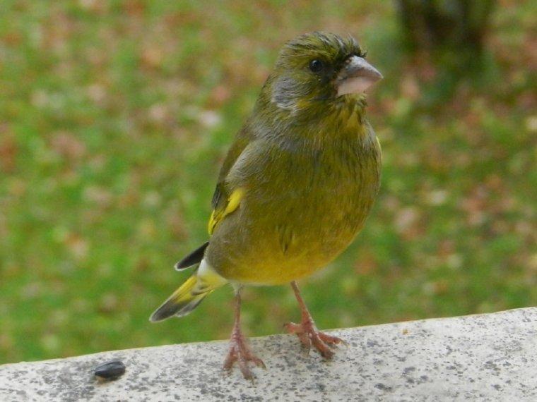520    Oiseaux du jardin