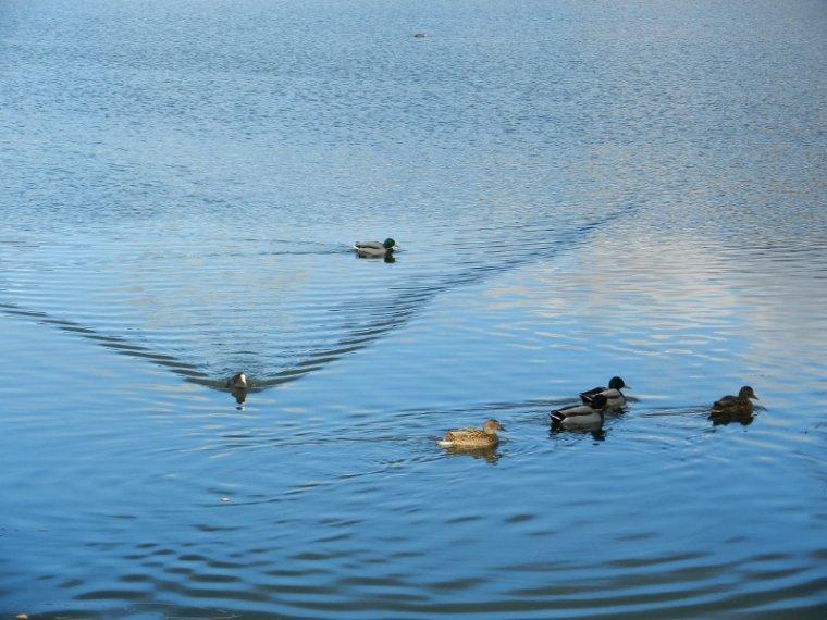 530   Les étangs...