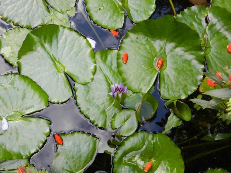 545 La Martinique: le jardin de Balata