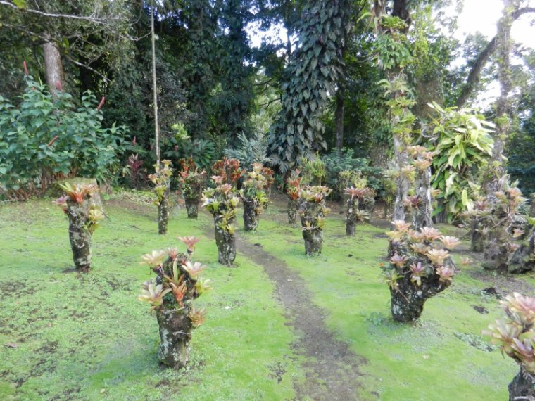 548 La Martinique: le jardin de Balata