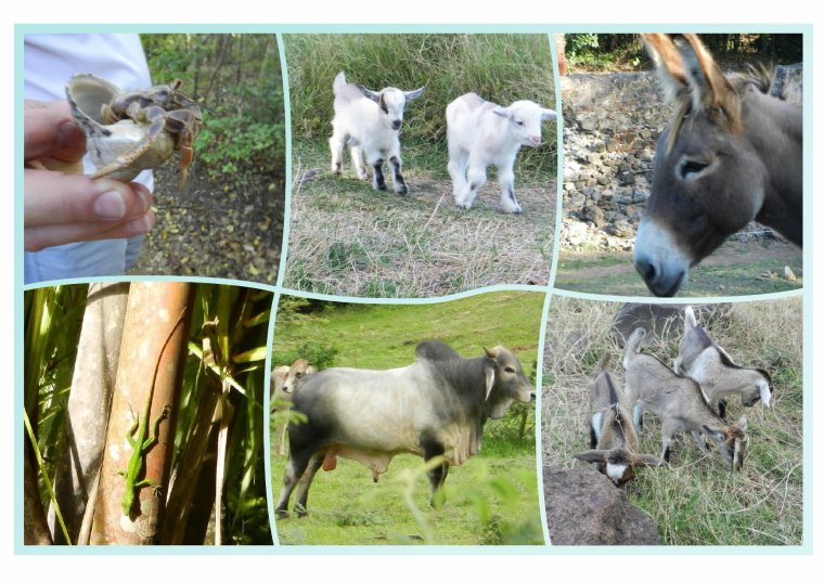 550  La Martinique: animaux