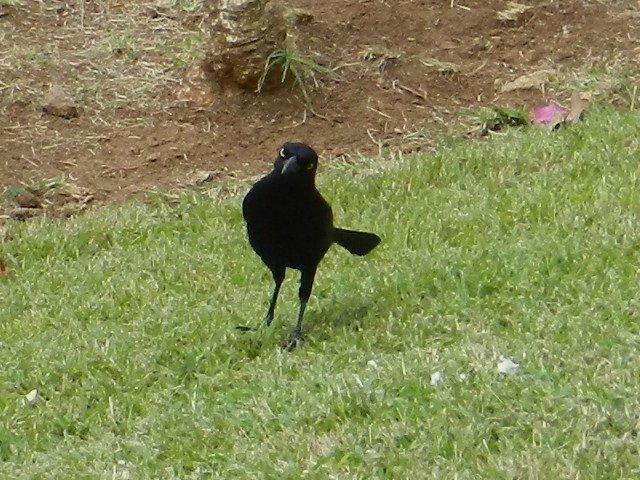 561  La Martinique : z'animaux...