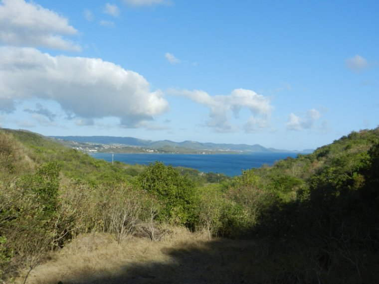 568  La Martinique : balade en campagne....