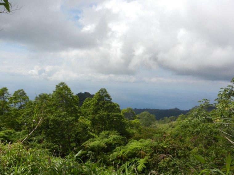 575  La Martinique: sur les pentes de la Montagne Pelée