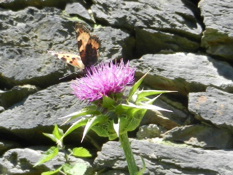 613 Fleurs et Insectes