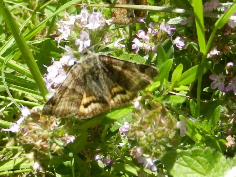 614  Fleurs et insectes ( suite)