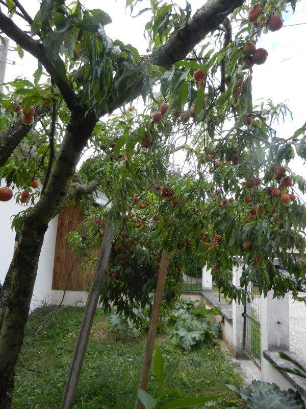 643    Fruits d'été